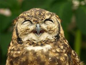 happyy owl