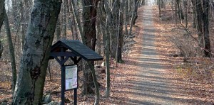 burlington-sessions-woods