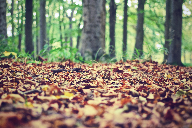 forest-floor-569274