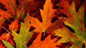 colourful_autumn_leaves-hd